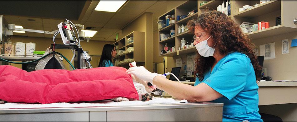 Pet Dentals in Tulare CA