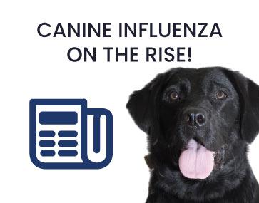 News at Tulare Veterinary Hospital
