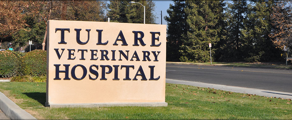 Welcome to Tulare Veterinary Hospital