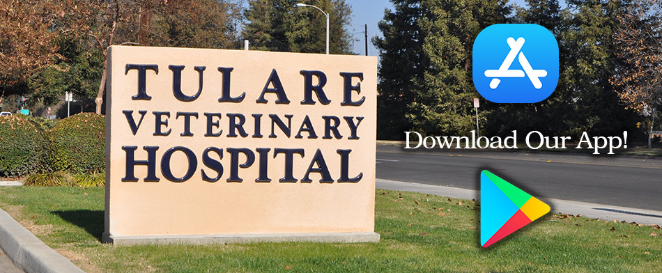 Veterinarian in Tulare CA