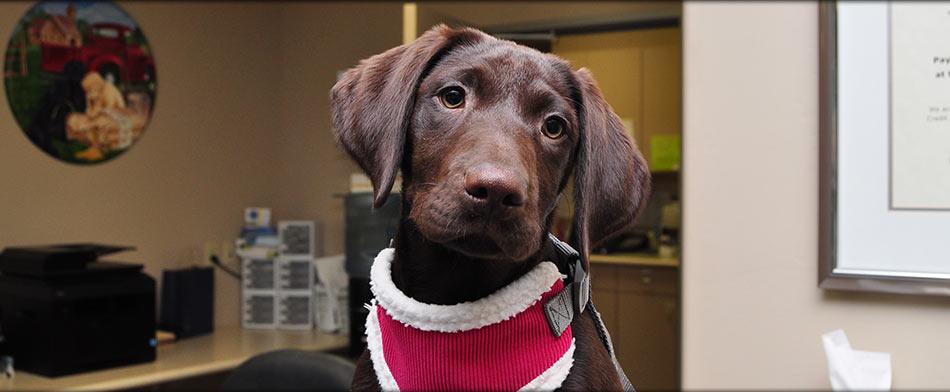 Puppy Veterinarian in Tulare CA