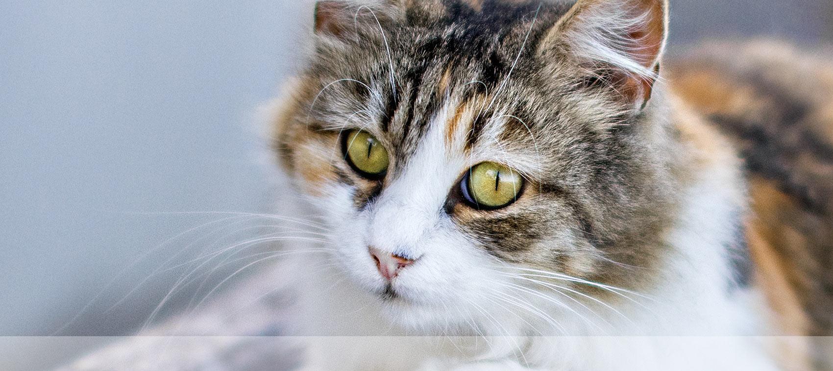 Veterinary Services in Tulare CA