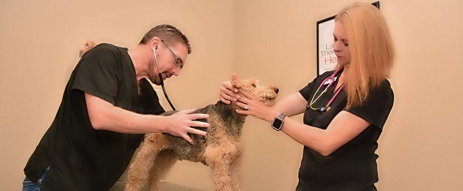 General Veterinary care at Tulare Veterinary Hospital